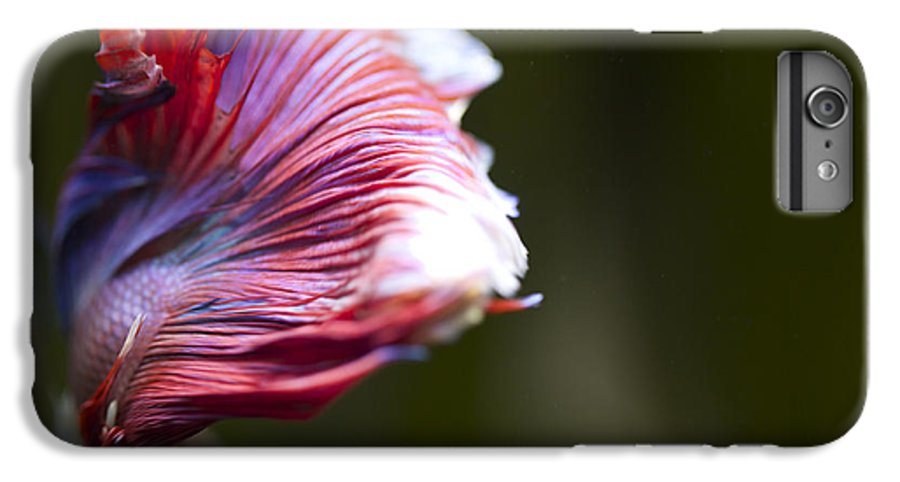 Betta Fish Flutter IPhone 6 Plus Case