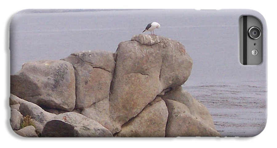 Bird IPhone 6 Plus Case featuring the photograph Bird On A Rock by Pharris Art