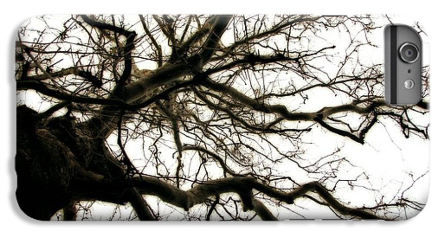 Branches IPhone 6 Plus Case featuring the photograph Branches by Michelle Calkins