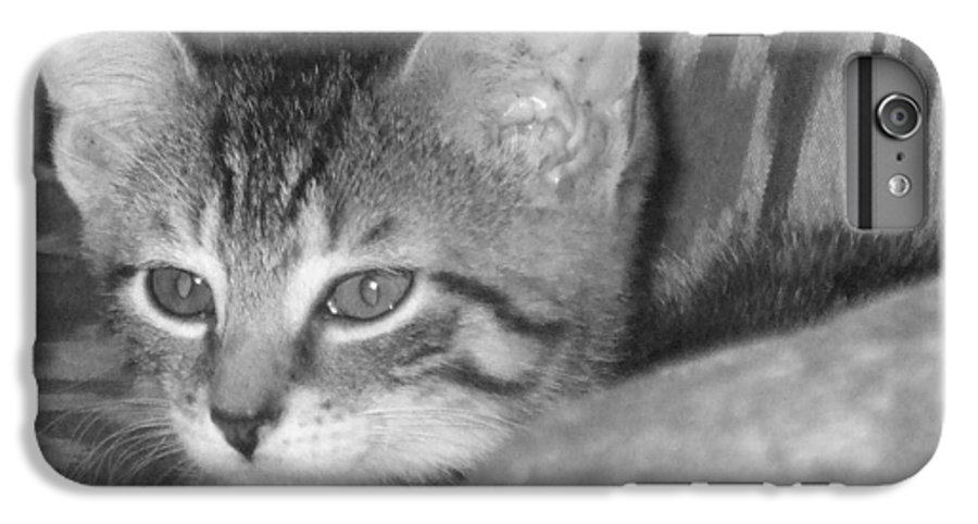 Kitten IPhone 6 Plus Case featuring the photograph Comfy Kitten by Pharris Art
