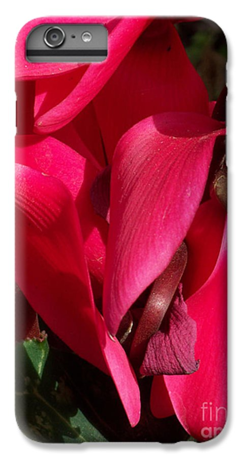 Flowers IPhone 6 Plus Case featuring the photograph Cyclamen by Kathy McClure