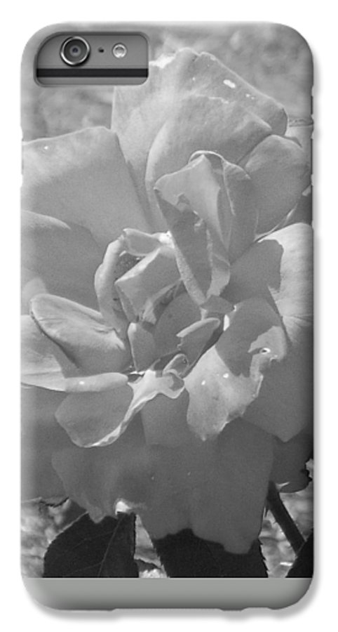 Rose IPhone 6 Plus Case featuring the photograph Dew Rose by Pharris Art