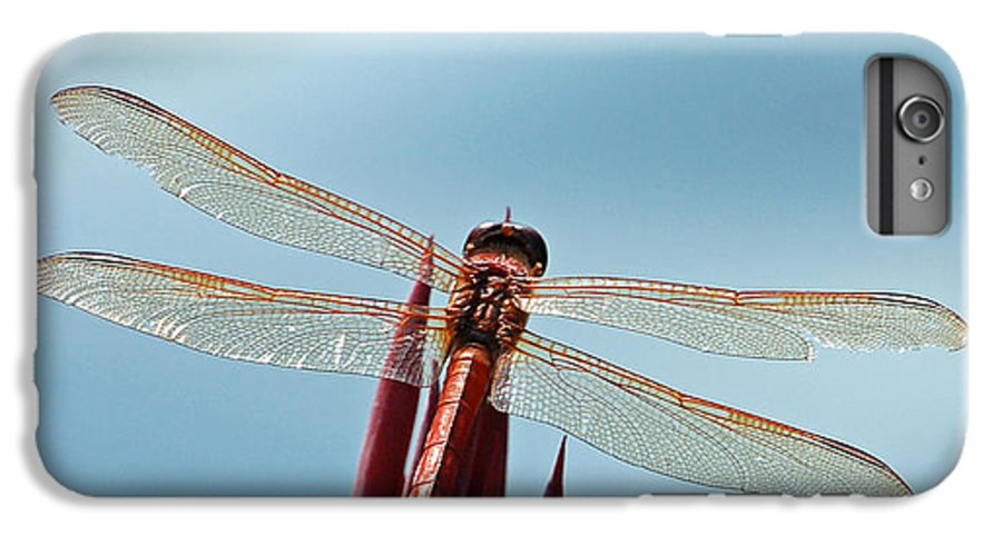 Dragonfly IPhone 6 Plus Case featuring the photograph Dragonfly Days by Suzanne Gaff