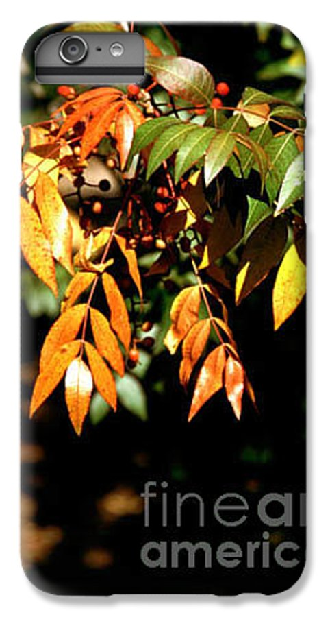 Fall Color IPhone 6 Plus Case featuring the photograph Fall Leaves by Kathy McClure