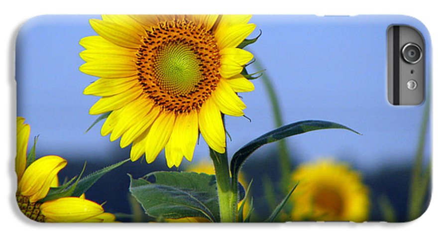 Sunflower IPhone 6 Plus Case featuring the photograph Getting To The Sun by Amanda Barcon