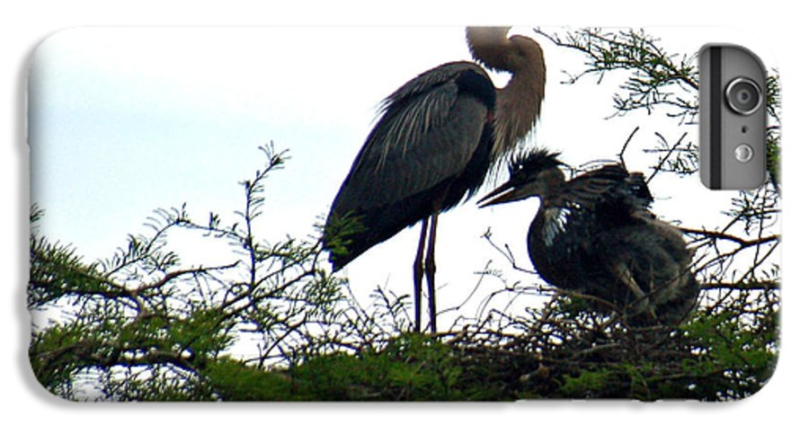 Blue Heron IPhone 6 Plus Case featuring the photograph Great Blue Heron With Fledglings II by Suzanne Gaff