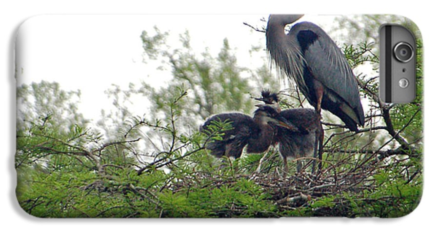 Great Blue Heron IPhone 6 Plus Case featuring the photograph Great Blue Heron With Fledglings by Suzanne Gaff