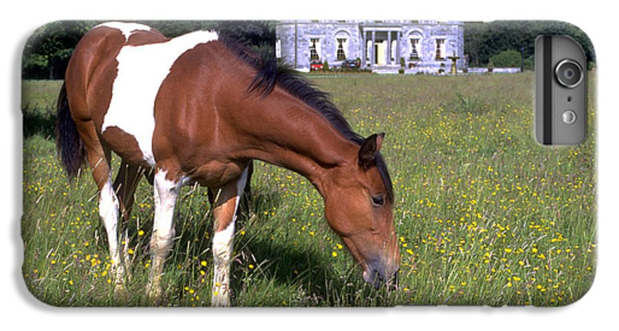 Horse IPhone 6 Plus Case featuring the photograph Horse Grazes Near St. Clerans by Carl Purcell