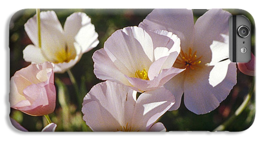Flowers IPhone 6 Plus Case featuring the photograph Icelandic Poppies by Kathy McClure