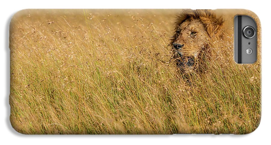 Lion IPhone 6 Plus Case featuring the photograph King by Mohammed Alnaser