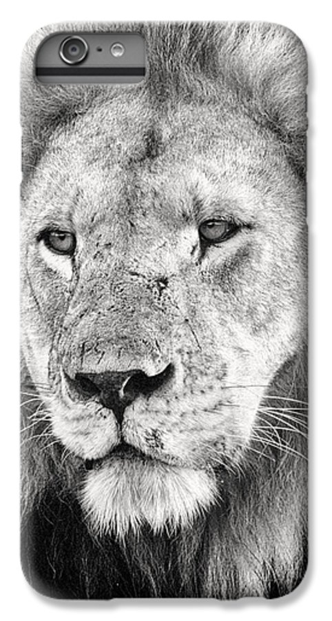 3scape IPhone 6 Plus Case featuring the photograph Lion King by Adam Romanowicz
