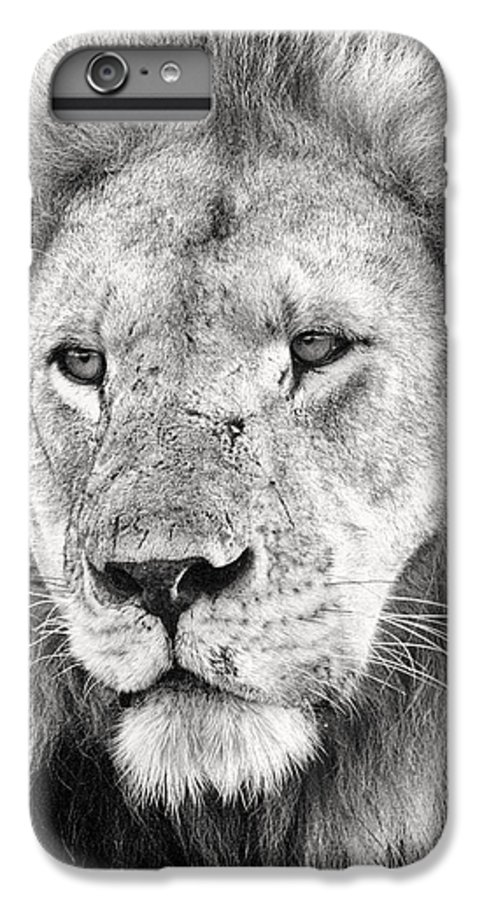 3scape Photos IPhone 6 Plus Case featuring the photograph Lion King by Adam Romanowicz