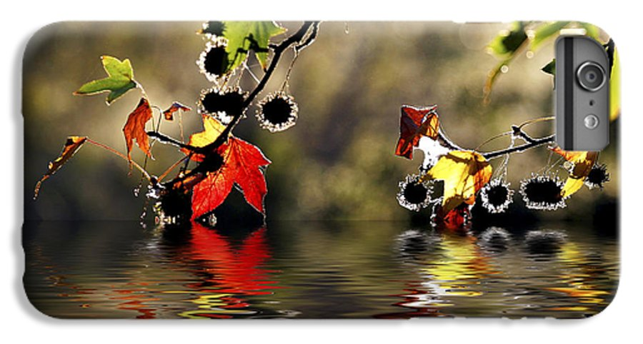Liquidambar Maple Autumn Fall Flood Water Reflection IPhone 6 Plus Case featuring the photograph Liquidambar In Flood by Sheila Smart Fine Art Photography