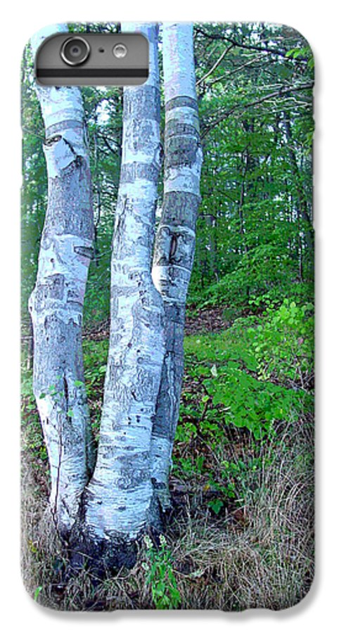 Birch Tree IPhone 6 Plus Case featuring the photograph Lone Birch In The Maine Woods by Suzanne Gaff