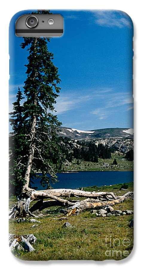Mountains IPhone 6 Plus Case featuring the photograph Lone Tree At Pass by Kathy McClure