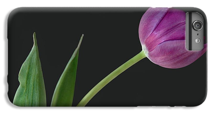 Flower IPhone 6 Plus Case featuring the photograph Looking Ahead by Dan Holm