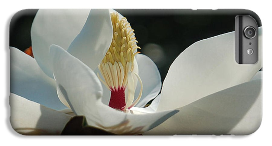 Magnolia IPhone 6 Plus Case featuring the photograph Magnolia Tiny Gem by Suzanne Gaff