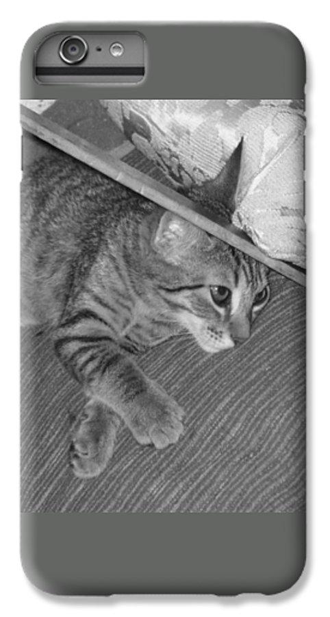 Kitten IPhone 6 Plus Case featuring the photograph Model Kitten by Pharris Art