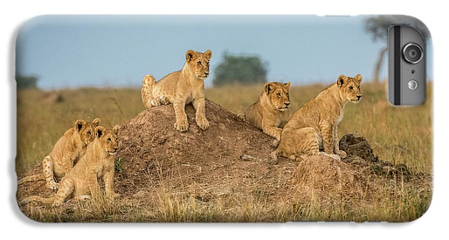 Lions IPhone 6 Plus Case featuring the photograph Mom's Coming Back - Dinner Is Almost Here. by Jeffrey C. Sink