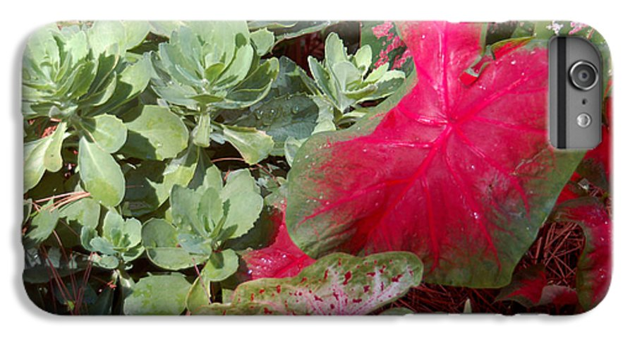 Caladium IPhone 6 Plus Case featuring the photograph Morning Rain by Suzanne Gaff