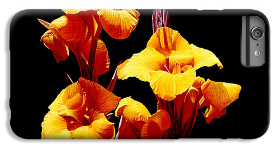 Yellow Cannas IPhone 6 Plus Case featuring the painting Orange Cannas by Gary Hernandez