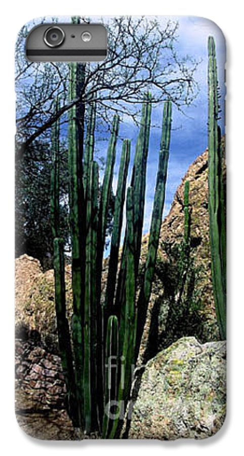 Cactus IPhone 6 Plus Case featuring the photograph Organ Pipe by Kathy McClure