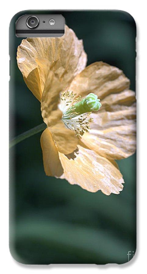 Poppy Orange IPhone 6 Plus Case featuring the photograph Poppy by Tony Cordoza