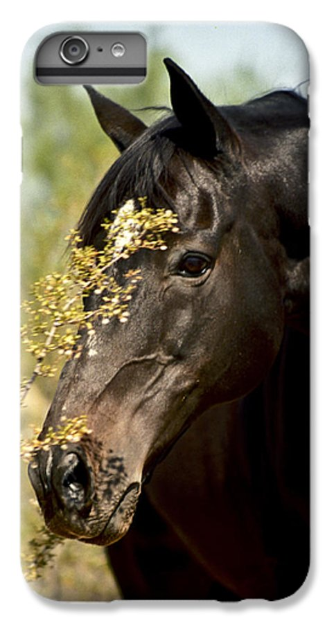 Horse IPhone 6 Plus Case featuring the photograph Portrait Of A Thoroughbred by Kathy McClure