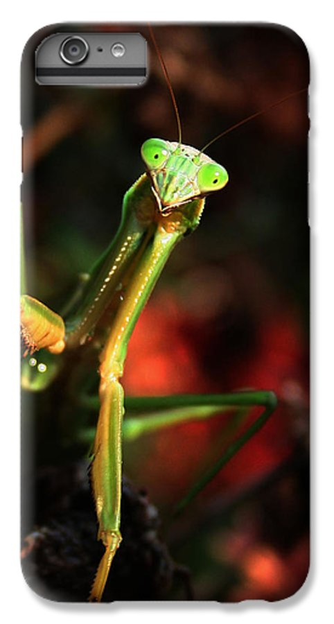 Praying Mantis IPhone 6 Plus Case featuring the photograph Praying Mantis Portrait by Linda Sannuti