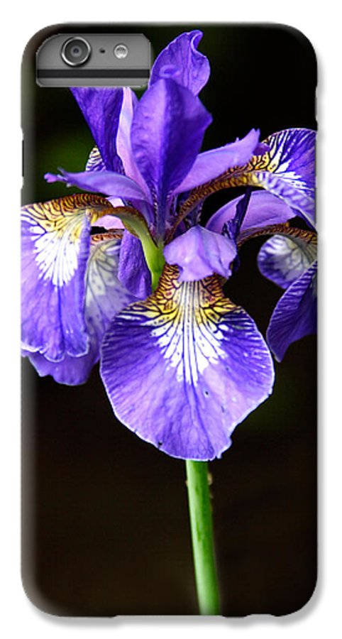 3scape Photos IPhone 6 Plus Case featuring the photograph Purple Iris by Adam Romanowicz