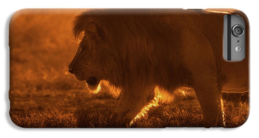 Lion IPhone 6 Plus Case featuring the photograph Shiny King by Mohammed Alnaser