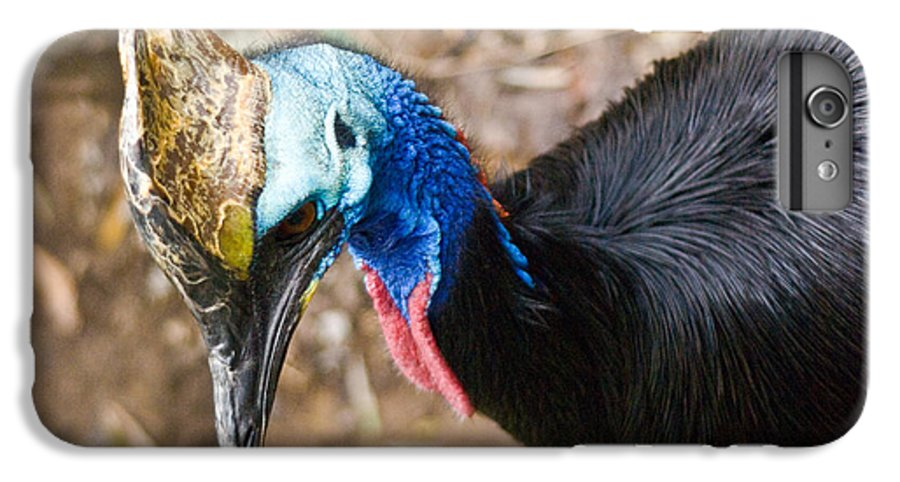 Cassorary IPhone 6 Plus Case featuring the photograph Southern Cassowary Portrait by Douglas Barnett