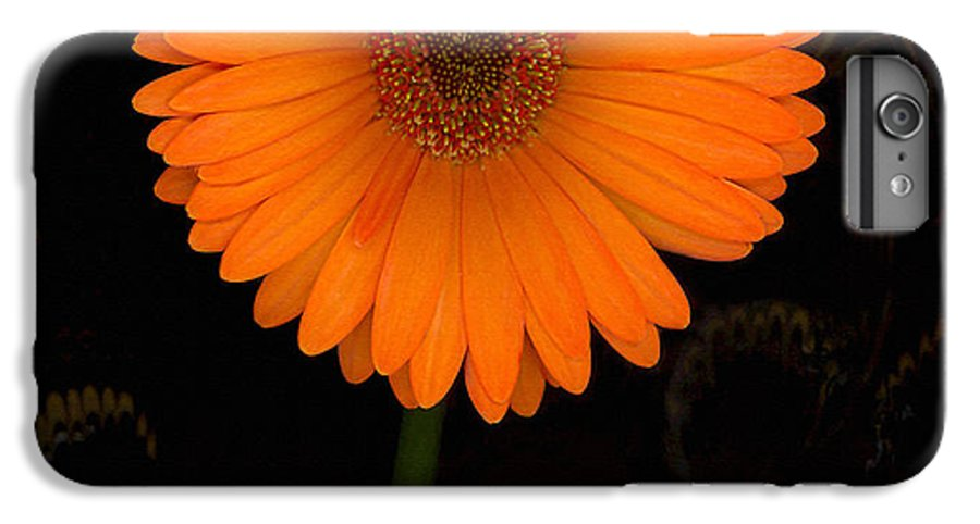 Gerbera Daisy IPhone 6 Plus Case featuring the photograph Standing Tall by Suzanne Gaff