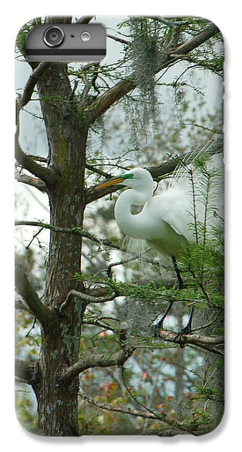 Egret IPhone 6 Plus Case featuring the photograph The Mating Dance by Suzanne Gaff