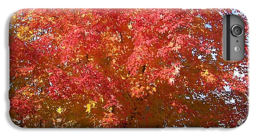 Tree IPhone 6 Plus Case featuring the photograph The Tree By The Church - Photograph by Jackie Mueller-Jones