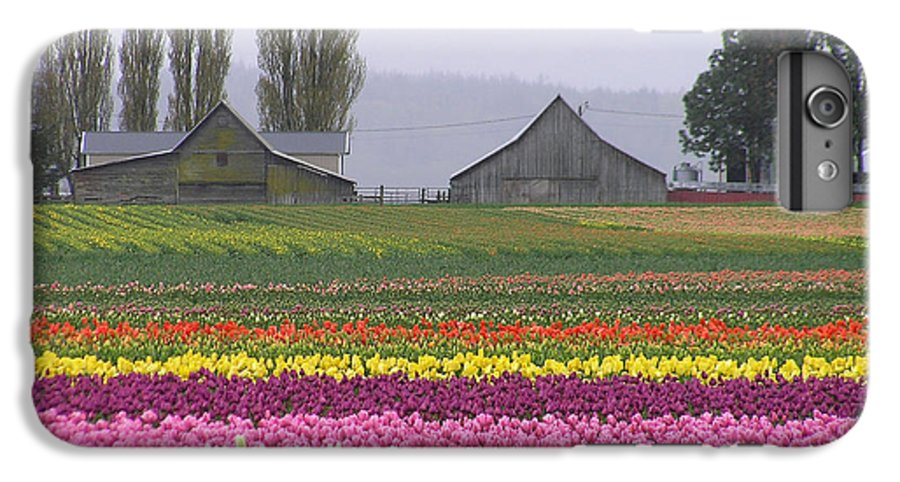 Tulips IPhone 6 Plus Case featuring the photograph Tulip Town Barns by Louise Magno