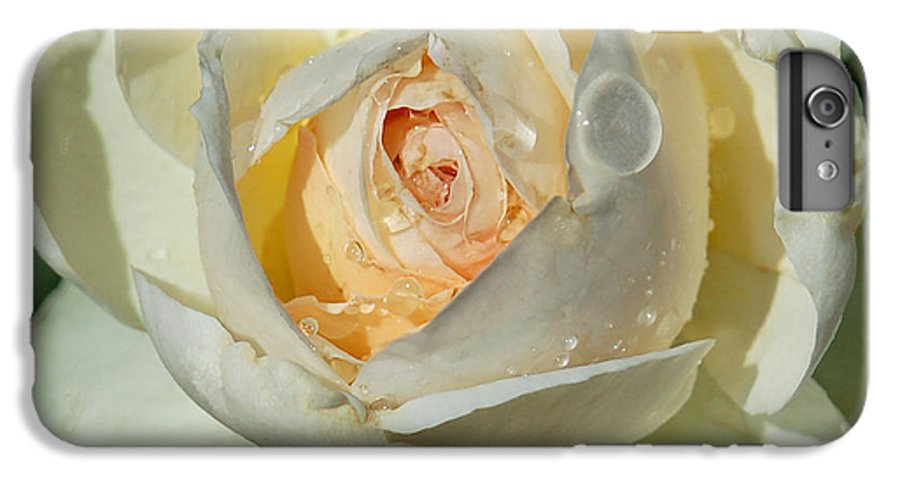 Rose IPhone 6 Plus Case featuring the photograph Unfolding by Suzanne Gaff