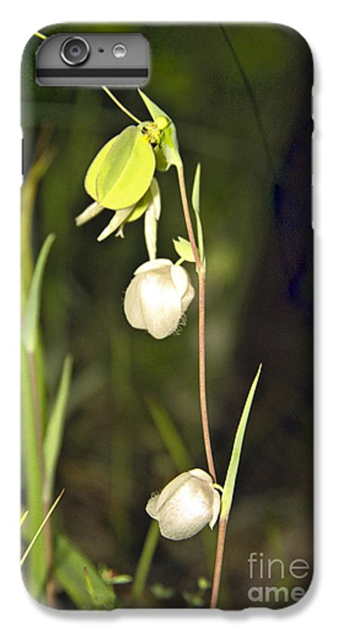 Wildflowers; Globes; Nature; Green; White IPhone 6 Plus Case featuring the photograph Whispers by Kathy McClure