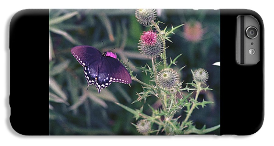 Butterfly IPhone 6 Plus Case featuring the photograph 060207-13 by Mike Davis