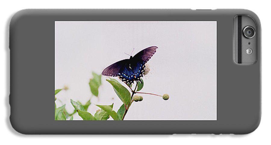 Butterfly IPhone 6 Plus Case featuring the photograph 080706-5 by Mike Davis
