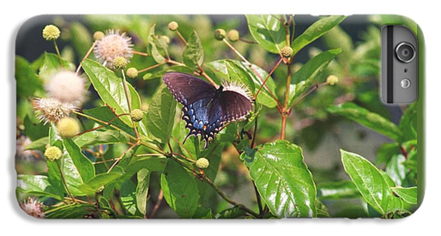 Butterfly IPhone 6 Plus Case featuring the photograph 080706-6 by Mike Davis