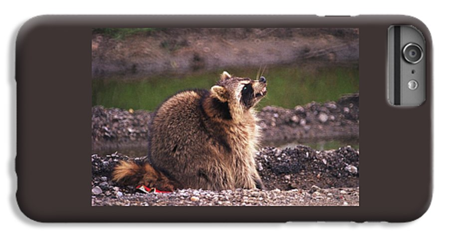 Raccoon IPhone 6 Plus Case featuring the photograph 070406-67 by Mike Davis