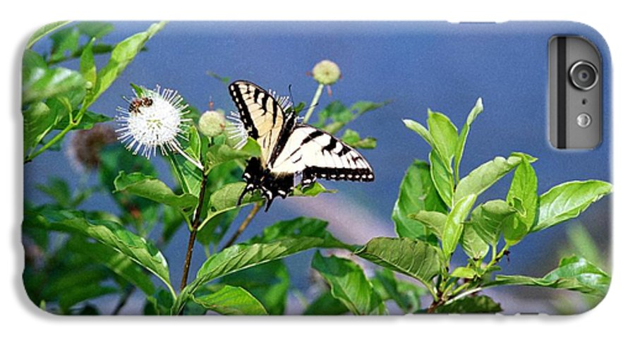 Butterfly IPhone 6 Plus Case featuring the photograph 080706-7 by Mike Davis