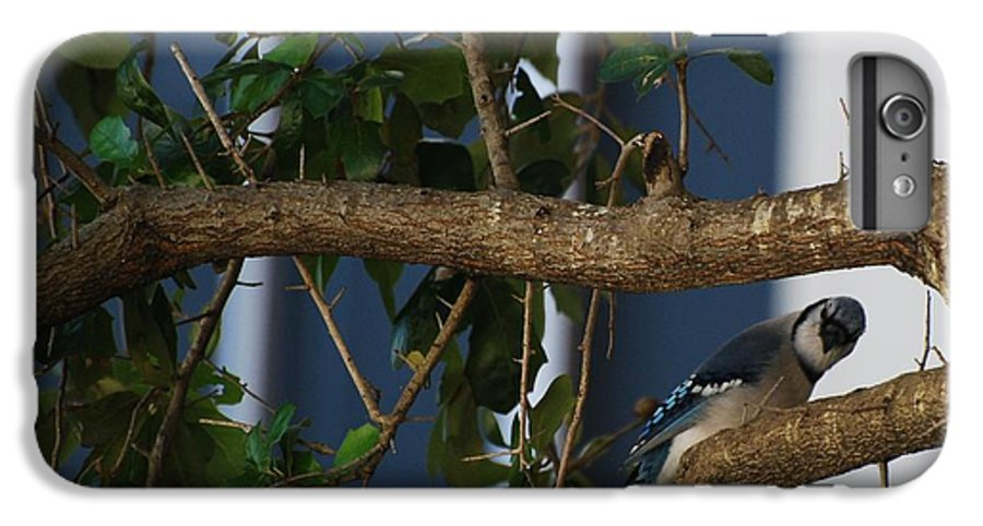 Birds IPhone 6 Plus Case featuring the photograph Blue Bird by Rob Hans