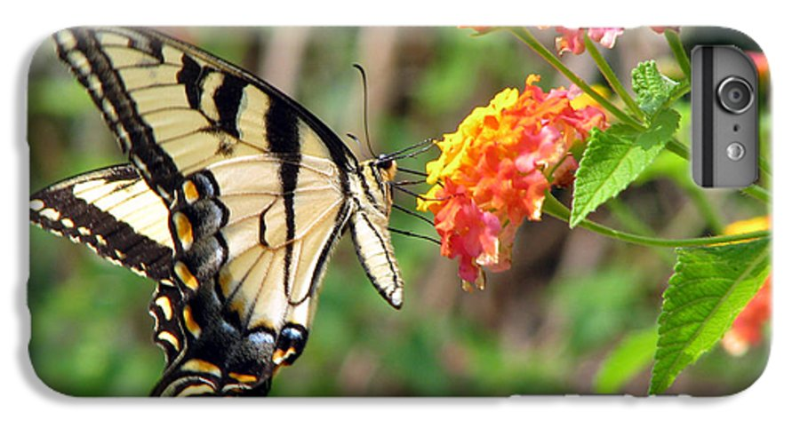 Butterfly IPhone 6 Plus Case featuring the photograph Butterfly by Amanda Barcon