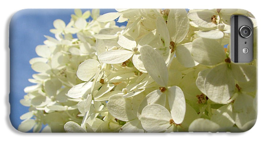 Hydranga IPhone 6 Plus Case featuring the photograph Hydrangea by Amanda Barcon