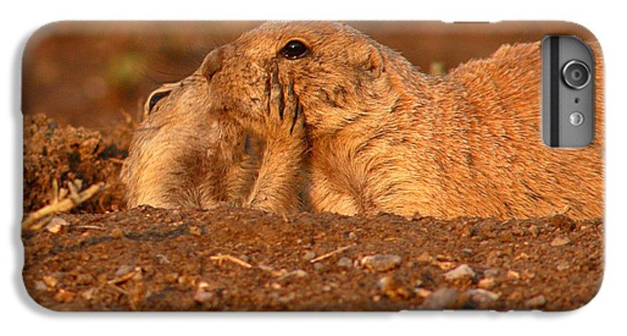 Prairie Dog IPhone 6 Plus Case featuring the photograph Prairie Dog Tender Sunset Kiss by Max Allen