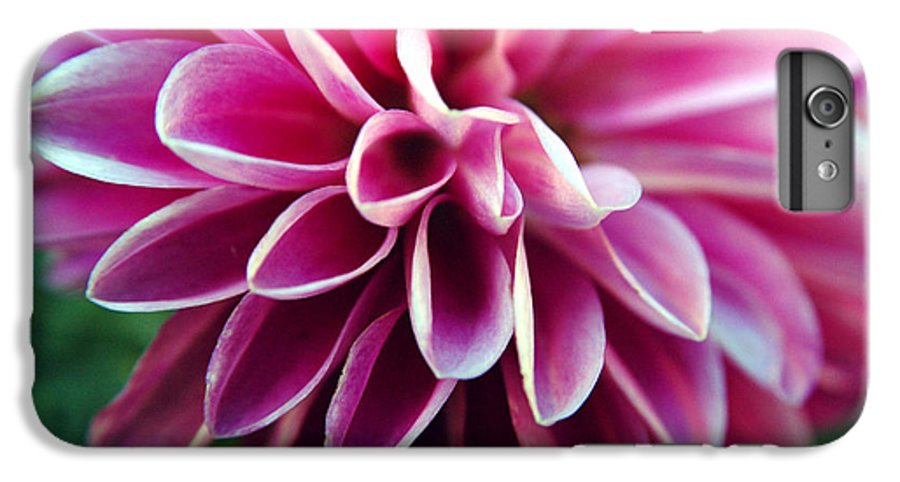 Flower IPhone 6 Plus Case featuring the photograph Untitled by Kathy Schumann
