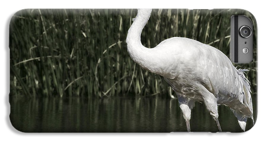 Whooping IPhone 6 Plus Case featuring the photograph Whooping Crane by Al Mueller