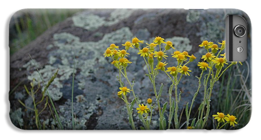 Flowers IPhone 6 Plus Case featuring the photograph Untitled by Kathy Schumann
